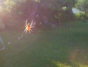 Netzwerk Spinne_web